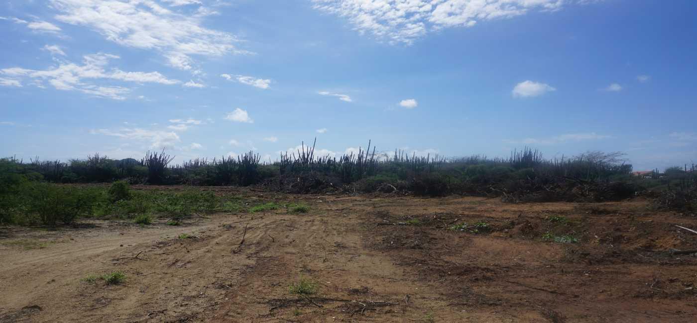 San Barbola land (7)