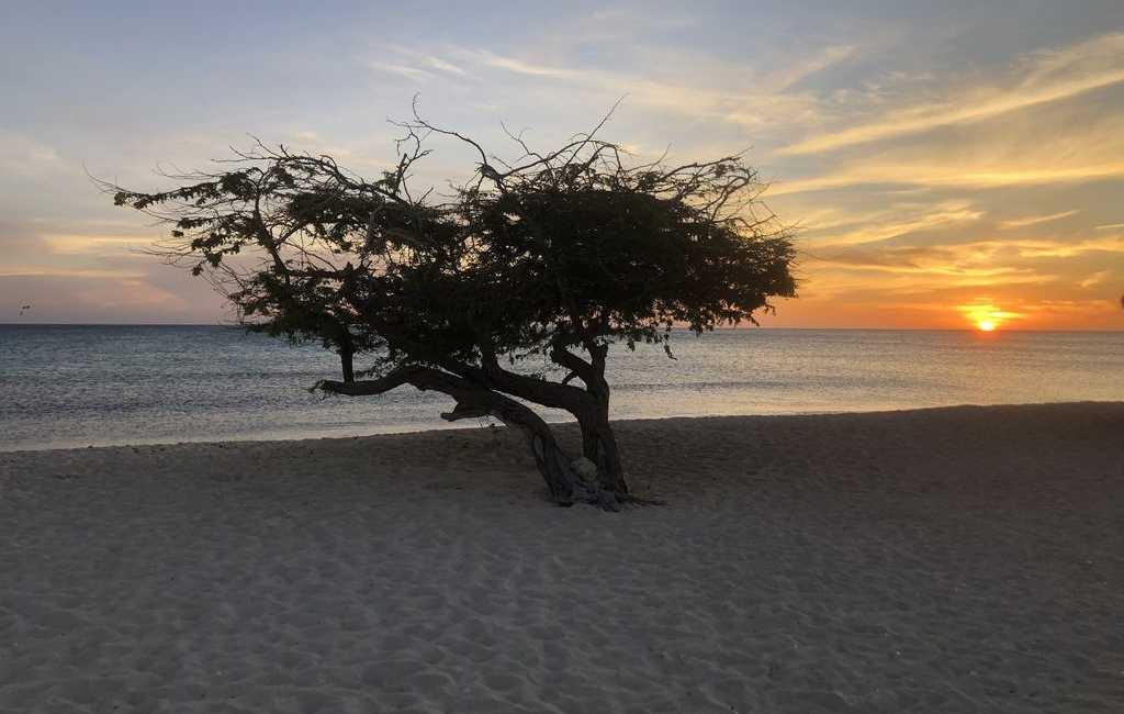 LARGE MODERN BEACH VILLA aruba haven 3