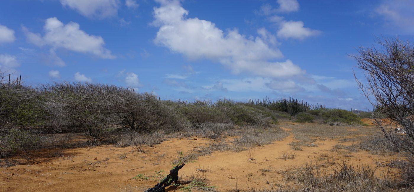 Matadera land (13)