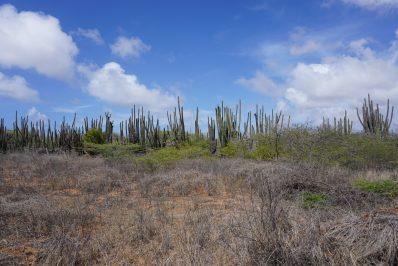 Matadera land (2)